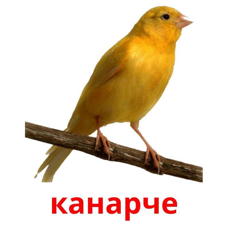 Карточки по болгарскому языку