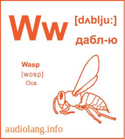 Английский алфавит буква W.
