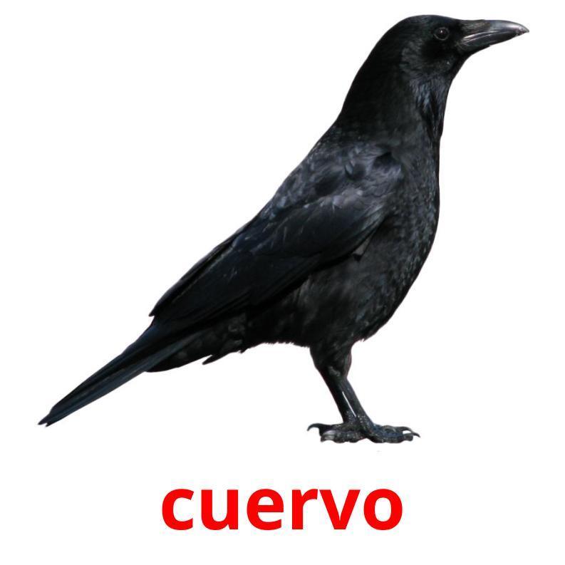 Птицы на испанском языке. Карточки.
