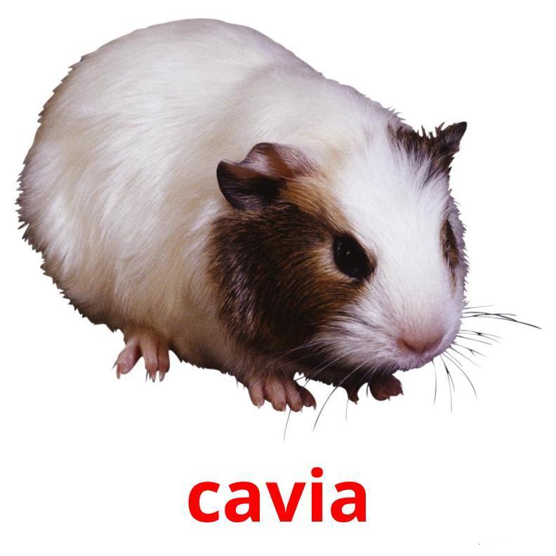 Карточки итальянских слов