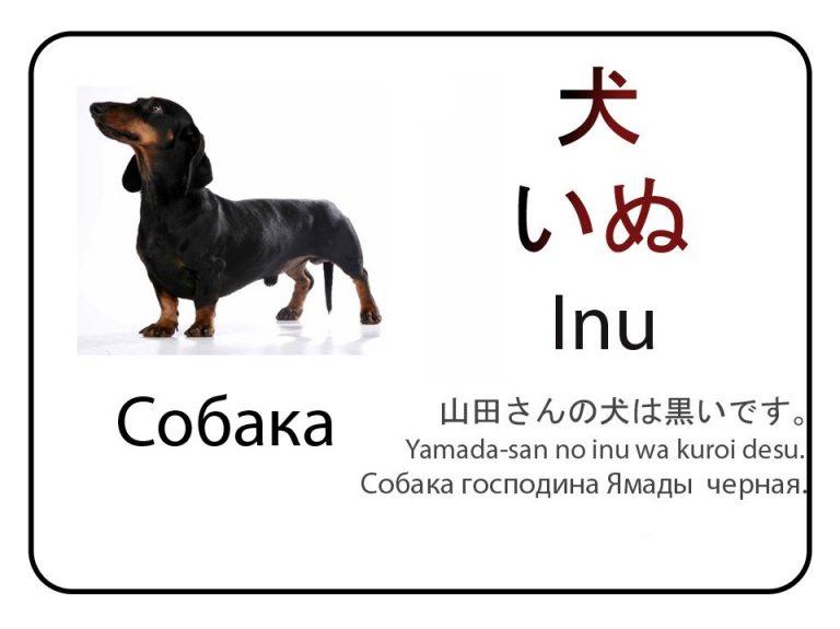 Собака на японском языке. Бесплатные карточки.