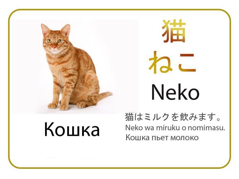 Кошка на японском языке. Бесплатные карточки.