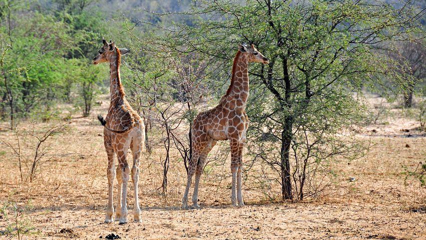 Природа Сомали